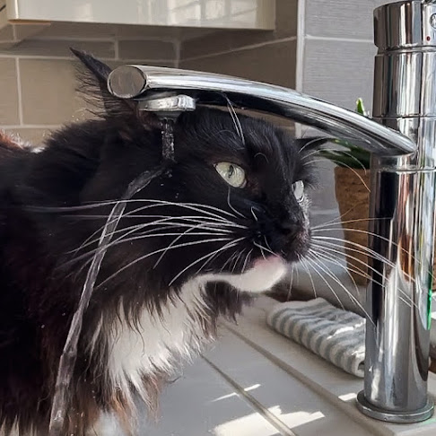 Cat behaves like a defective robot when drinking from a tap