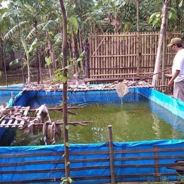 Cara Budidaya Ikan Lele di Kolam Terpal Sampai Panen Untuk Pemula