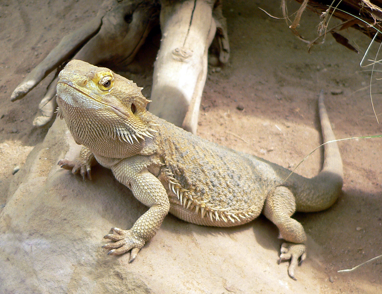 81+ Nama Dan Gambar Hewan Reptil Gratis Terbaik
