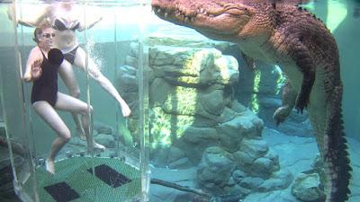 Hồ bơi Crocosaurus Cove