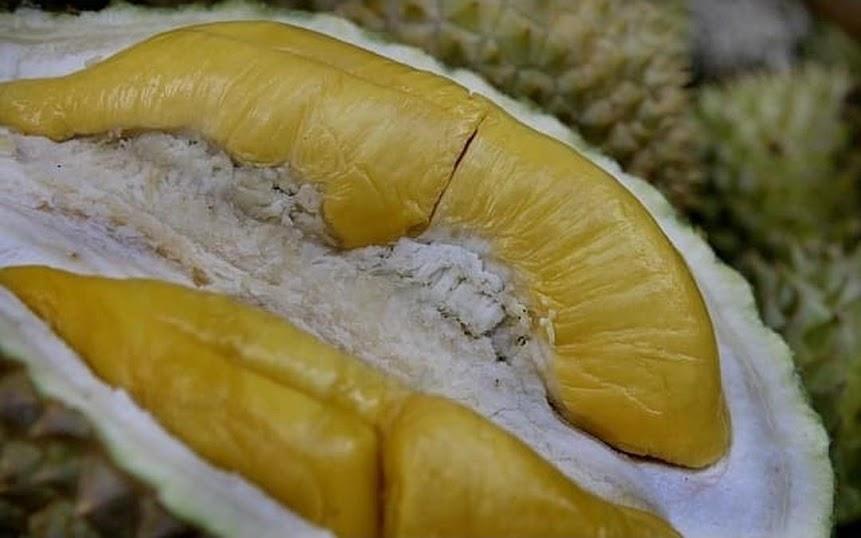 Bibit Buah Durian Musangking Kaki 3 okulasi super unggul Banjarmasin