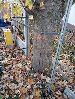 Drzewo w ogrodzeniu jak sobie poradzić ?