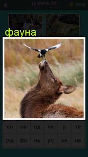 антилопа у которой на нос села птица 20 уровень 667 слов