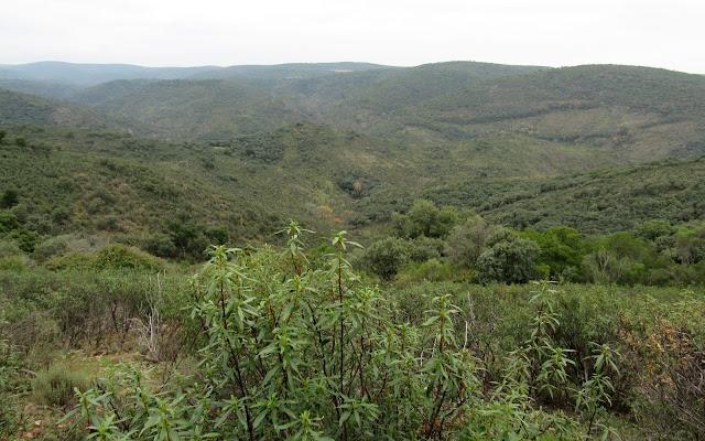 Vegetación mediterránea. Parque nacional de Cabañeros
