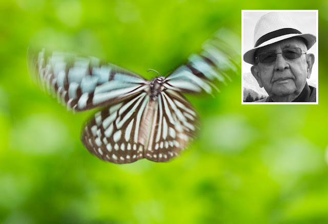 cronica carlos romero beleza natureza