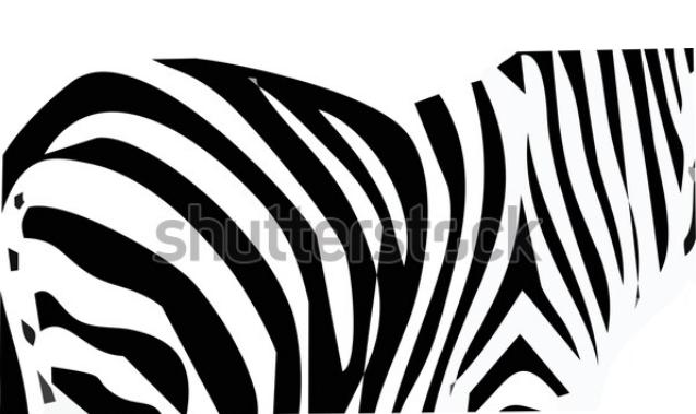 cartoon illustration zebra