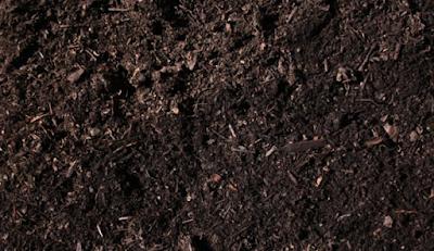 Tanah Humus, Ciri, Khasiat Serta Kekurangannya