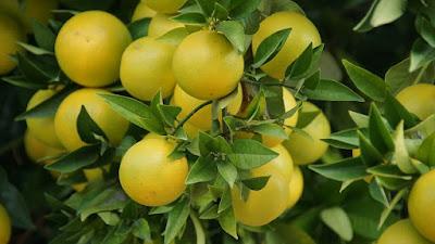 9 Buah yang mengandung vitamin c tinggi