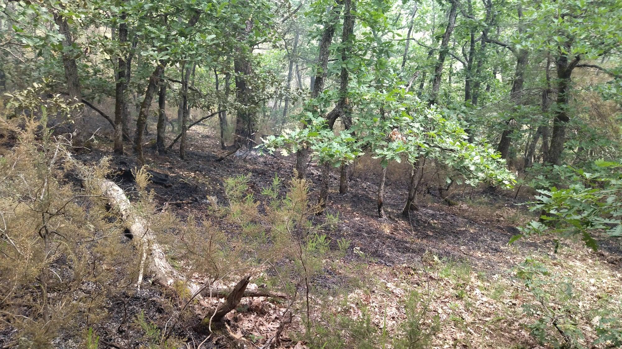 Πυρκαγιά στο Εθνικό Πάρκο Δάσους Δαδιάς – Λευκίμης – Σουφλίου
