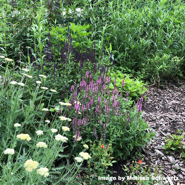 The butterfly garden at Heron Haven is ready to welcome pollinators!
