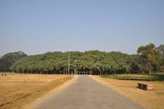 Great Banyan Tree India, pohon beringin sila ke