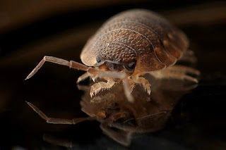 Pengertian Hewan Parasit dan Contohnya
