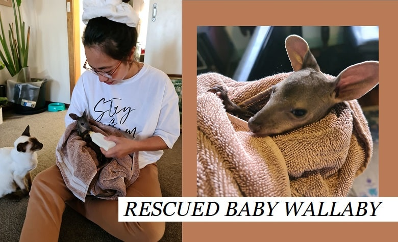 We Rescued a Baby Wallaby, and here is how you can help on saving millions of wildlife in distress this holiday season