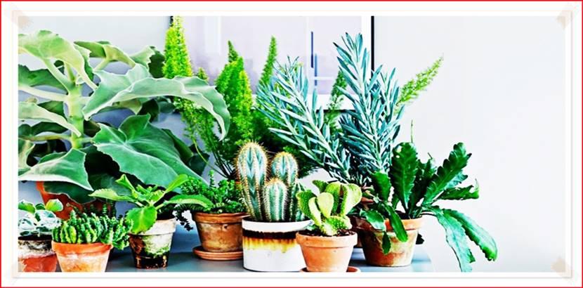 Польза комнатных растений для человека