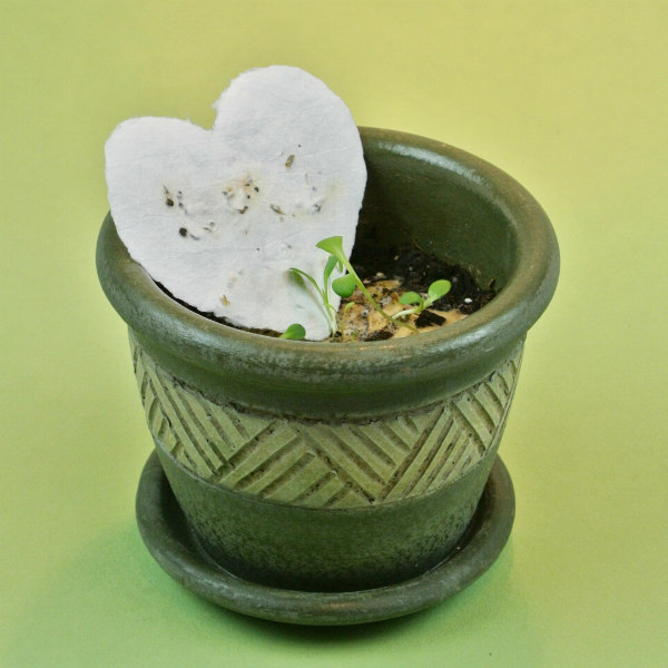 ceramic flower pot with seed paper heart placed on soil from which a few seedlings have sprouted