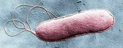 Sabotaging flagella of bacteria to halt infections