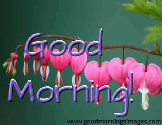 Good Morning Shayari With Images Free Download