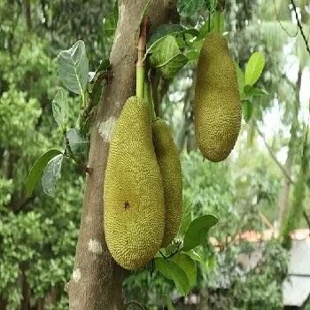 फणस, jackfruit vegetables name in Marathi