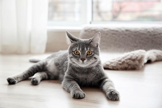 Czy kot spada na cztery łapy?