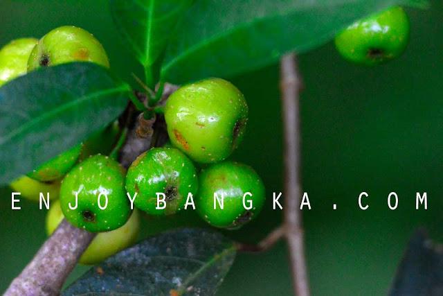 buah khas hutan ubb