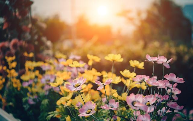 خلفيات زهور روعة