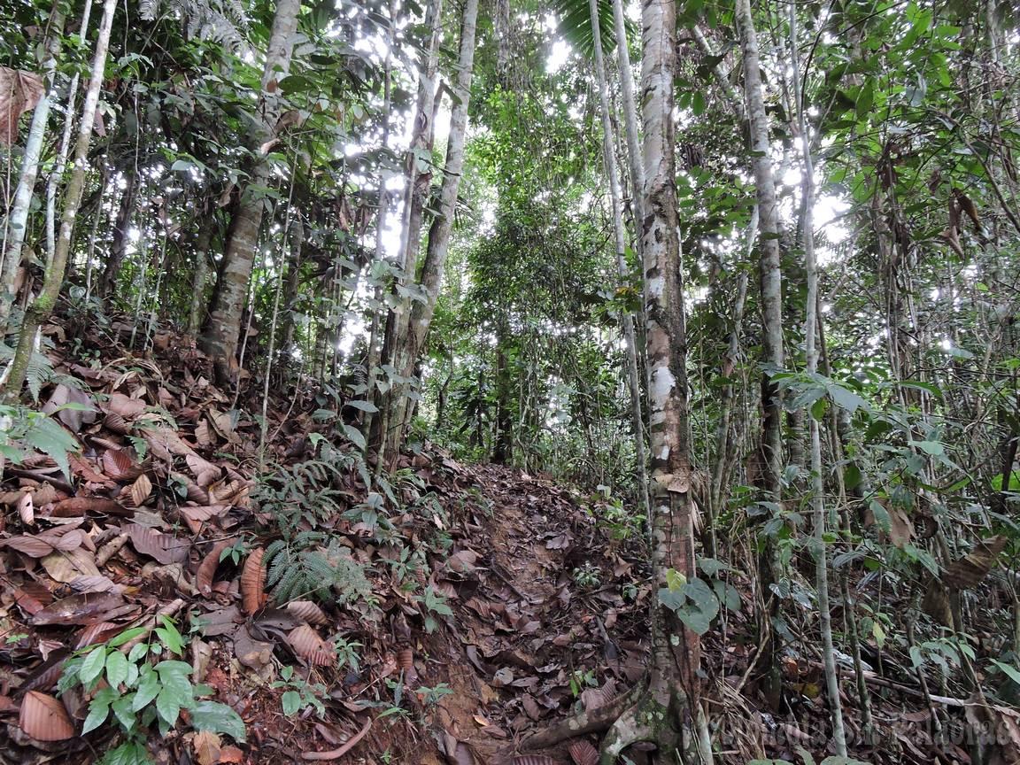 bosque de diferentes árboles en montañas antioqueñas