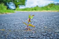 roślina wyrastająca z asfaltu