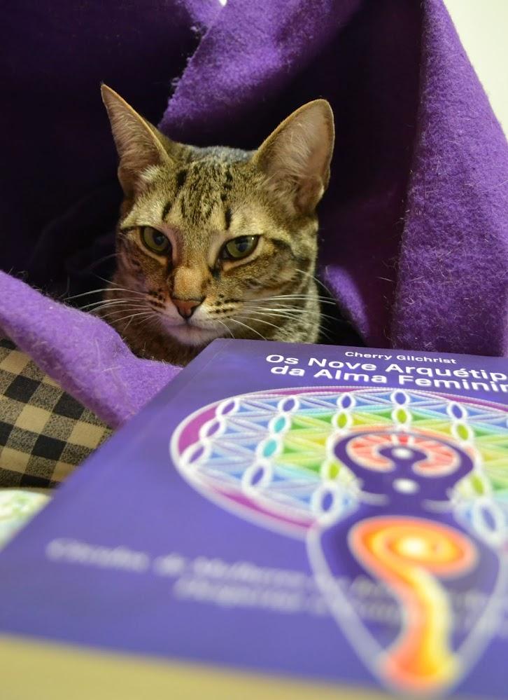 """Minha gata, Camomila, e o livro """"Os nove arquétipos da alma feminina"""", de Cherry Gilchrist"""