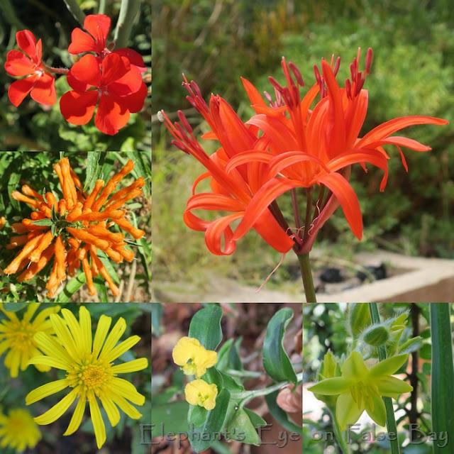 Indigenous March flowers with Nerine sarniensis