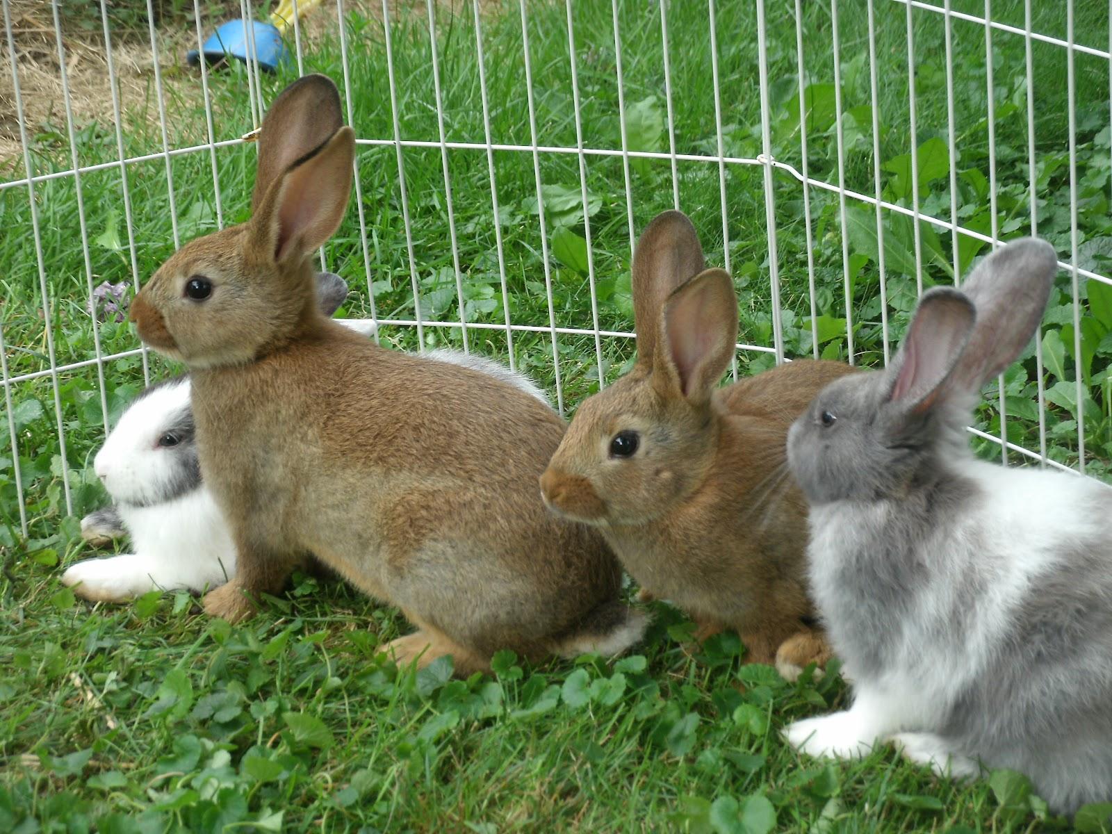 Rabbit chat now