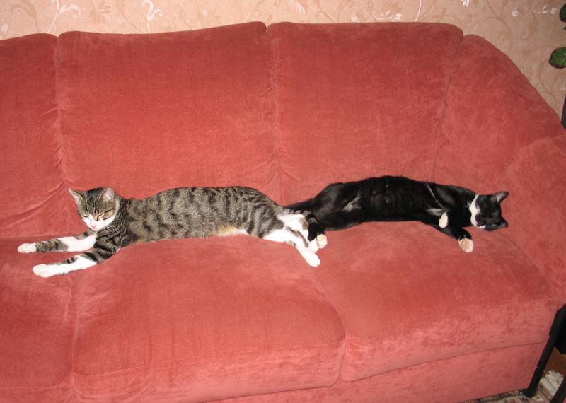 silber mal wieder ein katzenpost. Black Bedroom Furniture Sets. Home Design Ideas