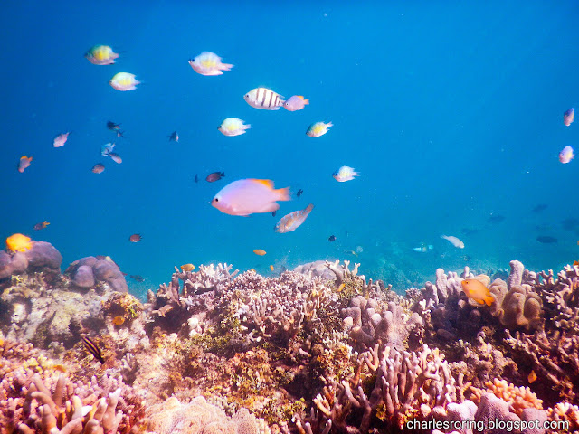 Marine Life at the house reef of Raflow Resort