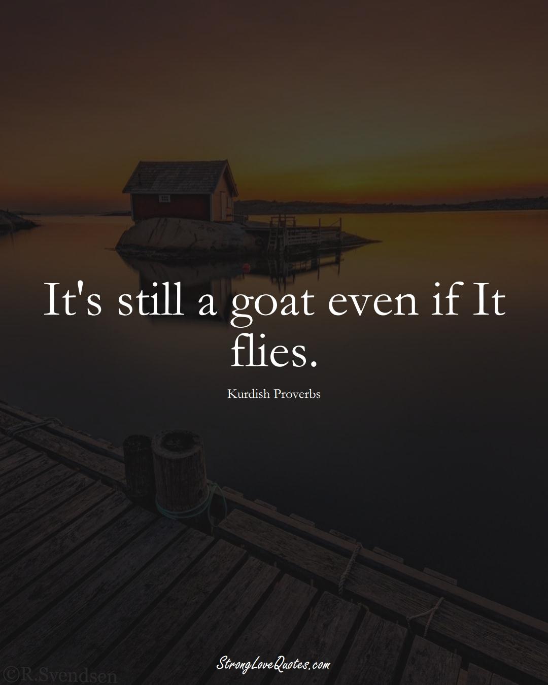 It's still a goat even if It flies. (Kurdish Sayings);  #aVarietyofCulturesSayings