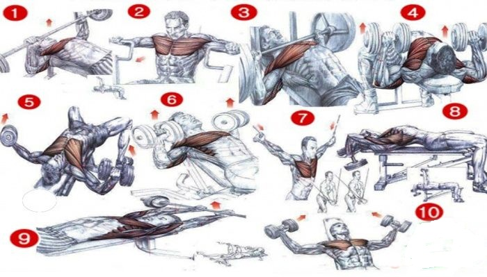 Top 5 Best Chest Exercises - all-bodybuilding.com