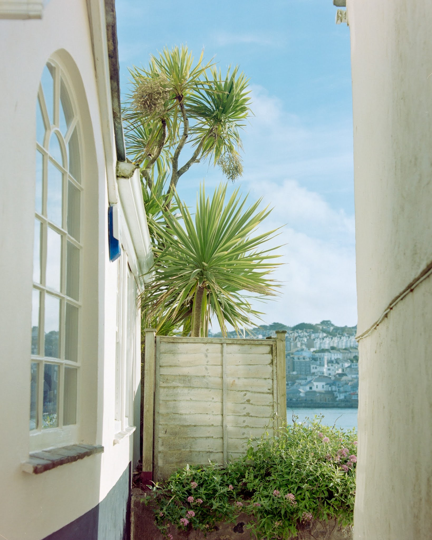 Palm tree in St Ives
