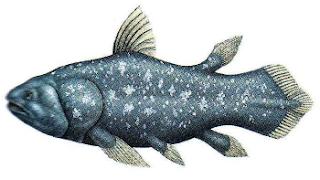 Ikan coelacanth, Latemeria chalumnae, jenis ikan purba yang masih hidup