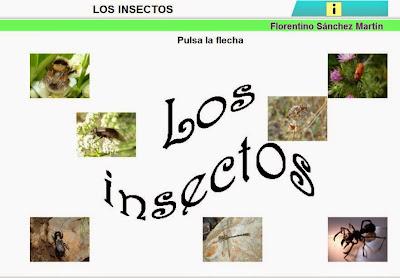 http://cplosangeles.juntaextremadura.net/web/edilim/curso_3/cmedio/animales_invertebrados_3/insectos/insectos.html