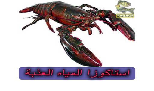 طريقة صيد سمك البياض النيلي ومعلومات عنه | بياض نيلي