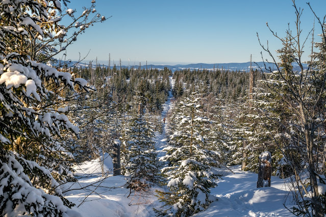 Wanderung auf den Lusen  Winterwandern im Nationalpark Bayerischer Wald 06