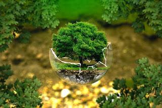 Pengertian jaringan tumbuhan dan ciri Cirinya