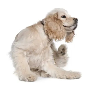 Lice prevention for dogs
