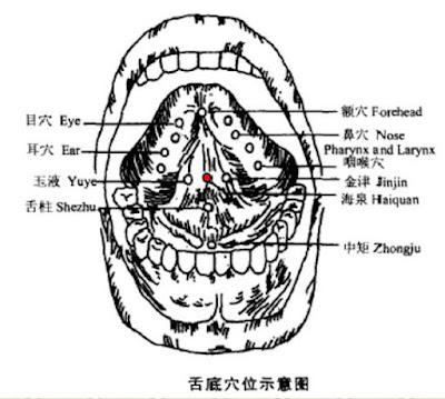 海泉穴位 | 海泉穴痛位置 - 穴道按摩經絡圖解 | Source:zhongyibaike.com