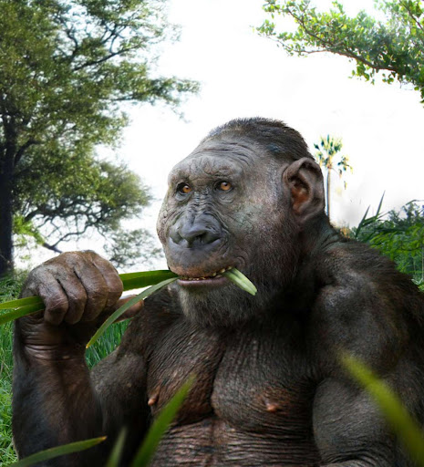 Research 'final nail in the coffin' of Paranthropus as hard object feeders