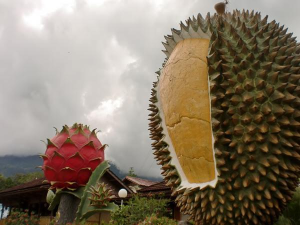 Wisata Durian Bogor