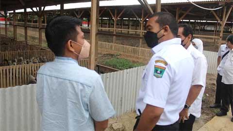 Audy Joinaldy kunjungi Mato Aia Jaya Farm