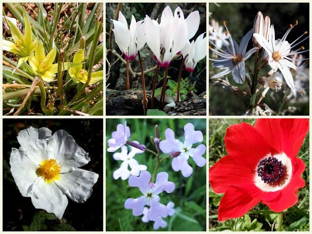 פרחי בר ארצישראלים