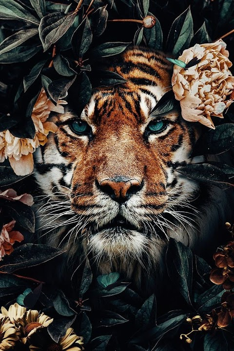 Animals Wallpapers 28+