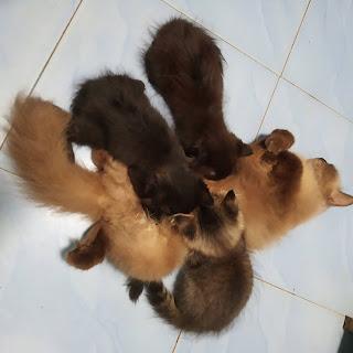 merawat-kucing-hamil-yang-benar