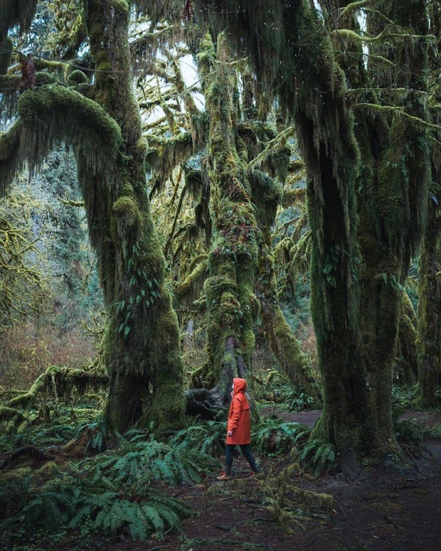 Lost in the mysterious fairy world in the American forest