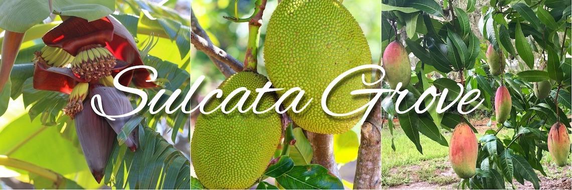 Sulcata Grove Okrung Mango Tasting